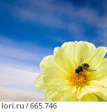 Купить «Муха-журчалка на цветке», фото № 665746, снято 18 сентября 2008 г. (c) Алексей Варлаков / Фотобанк Лори