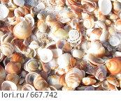 Куча морских ракушек. Стоковое фото, фотограф Azaria Iounaev / Фотобанк Лори