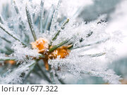 Купить «Иней на иголках сосны», фото № 677322, снято 7 января 2009 г. (c) Юрий Брыкайло / Фотобанк Лори