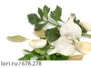 Купить «Сельдерей, чеснок и лавровые листья», фото № 678278, снято 29 ноября 2008 г. (c) Андрей Рыбачук / Фотобанк Лори