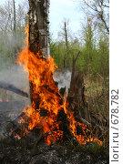 """Купить «Лесной пожар в заказнике """"Журавлиная родина"""". Горящий ствол берёзы.», фото № 678782, снято 1 мая 2008 г. (c) Анна Андреева / Фотобанк Лори"""