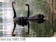 Купить «Черные лебеди», фото № 681138, снято 13 октября 2005 г. (c) Юлия Сайганова / Фотобанк Лори