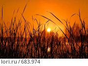 Рассвет в камышах. Стоковое фото, фотограф Евгений Ильдутов / Фотобанк Лори
