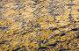 Золотистое отражение, фото № 684454, снято 29 марта 2007 г. (c) Argument / Фотобанк Лори