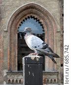 Купить «Голубь на фоне старинного окна», фото № 685742, снято 29 сентября 2006 г. (c) Demyanyuk Kateryna / Фотобанк Лори