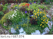 Купить «Альпийская горка на дачном участке», фото № 687074, снято 29 июля 2007 г. (c) Анатолий Косолапов / Фотобанк Лори
