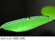 Листочек с каплей. Стоковое фото, фотограф Равиль Рафагутдинов / Фотобанк Лори
