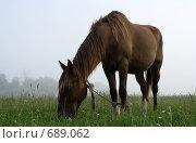 Купить «Лошадь в тумане», фото № 689062, снято 20 июля 2008 г. (c) Андрей Рыбачук / Фотобанк Лори