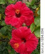 Купить «Тропические цветы», эксклюзивное фото № 694094, снято 7 августа 2007 г. (c) Михаил Карташов / Фотобанк Лори