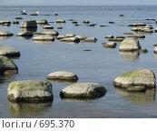 Летом на Финском заливе. Стоковое фото, фотограф Алла Виноградова / Фотобанк Лори