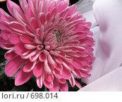 Купить «Хризантема. Макро», фото № 698014, снято 23 января 2009 г. (c) Заноза-Ру / Фотобанк Лори