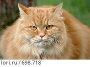 Купить «Рыжий кот», фото № 698718, снято 30 апреля 2008 г. (c) Игорь Шаталов / Фотобанк Лори