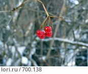 Калина гроздь ягод. Стоковое фото, фотограф Антон Серохвостов / Фотобанк Лори