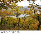 Осенний пейзаж. Стоковое фото, фотограф Елена Скопинцева / Фотобанк Лори