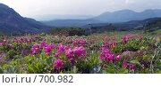 Купить «Долина горы Вачкажец. Камчатка», фото № 700982, снято 25 июля 2008 г. (c) Екатерина Соловьева / Фотобанк Лори