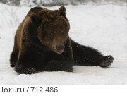 Купить «Медведь дразнится», фото № 712486, снято 14 февраля 2009 г. (c) Алексей Крылов / Фотобанк Лори