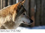 Купить «Волк. Профиль», фото № 713182, снято 3 февраля 2009 г. (c) Татьяна Белова / Фотобанк Лори