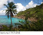 Купить «Пальма в Голубой лагуне Ансе Мэйджор», фото № 717018, снято 23 января 2009 г. (c) Игорь Никитенко / Фотобанк Лори