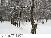 Графика зимы. Стоковое фото, фотограф Елена Багдаева / Фотобанк Лори