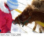 """Купить «Кормление """"верблюдика""""», фото № 722290, снято 24 февраля 2009 г. (c) Оля Косолапова / Фотобанк Лори"""
