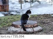 Купить «Кот», эксклюзивное фото № 735094, снято 5 марта 2009 г. (c) lana1501 / Фотобанк Лори