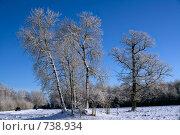 Купить «Заснеженные деревья в открытом поле», фото № 738934, снято 5 февраля 2007 г. (c) Aleksander Kaasik / Фотобанк Лори