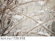 Сосульки ранней весной. Стоковое фото, фотограф Светлана Архи / Фотобанк Лори