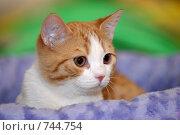 Котёнок. Стоковое фото, фотограф Александр Львов / Фотобанк Лори