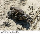 Лягушки. Стоковое фото, фотограф Евгений Степанов / Фотобанк Лори