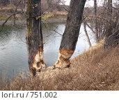 Купить «Здесь поработал бобр», эксклюзивное фото № 751002, снято 21 октября 2007 г. (c) Анатолий Матвейчук / Фотобанк Лори
