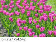 Цветы на лужайке. Стоковое фото, фотограф Vladimir Kolobov / Фотобанк Лори