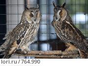 Купить «Ушастая сова», эксклюзивное фото № 764990, снято 19 марта 2009 г. (c) Яна Королёва / Фотобанк Лори