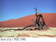 Купить «Пустыня Намиб», фото № 765746, снято 23 мая 2018 г. (c) Leksele / Фотобанк Лори