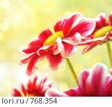 Купить «Садовые цветы», фото № 768354, снято 1 мая 2008 г. (c) Вероника Галкина / Фотобанк Лори