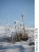 Купить «Иней на сухой траве», фото № 768578, снято 7 января 2009 г. (c) Gagara / Фотобанк Лори