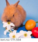 Купить «Пасхальный кролик», фото № 771554, снято 20 мая 2008 г. (c) Елена Блохина / Фотобанк Лори