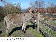 Купить «Серый ослик», фото № 772534, снято 26 марта 2009 г. (c) Татьяна Кахилл / Фотобанк Лори