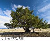 Купить «Одинокая сосна», фото № 772738, снято 9 сентября 2008 г. (c) Andrey M / Фотобанк Лори
