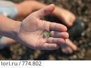Купить «Морские камешки на детской ладошке», фото № 774802, снято 19 октября 2007 г. (c) Gagara / Фотобанк Лори