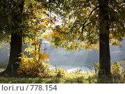 Осенние деревья. Бабье лето. Стоковое фото, фотограф Пакалин Сергей / Фотобанк Лори