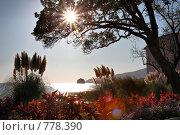 Купить «Солнечный день на Черном море», фото № 778390, снято 12 ноября 2008 г. (c) Pshenichka / Фотобанк Лори
