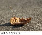 Осенний лист. Стоковое фото, фотограф Гортованова Мария / Фотобанк Лори