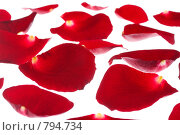Купить «Красные лепестки розы на белом фоне», фото № 794734, снято 20 января 2008 г. (c) Петухов Геннадий / Фотобанк Лори