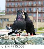 Купить «Поцелуй голубей», фото № 795006, снято 19 июня 2008 г. (c) RedTC / Фотобанк Лори
