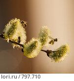 Купить «Весенние хлопоты», фото № 797710, снято 8 апреля 2009 г. (c) Сергей Бондарук / Фотобанк Лори