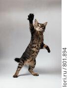 Котенок. Стоковое фото, фотограф Андрей Лыженков / Фотобанк Лори