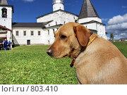 Купить «Друг человека на фоне монастырского двора, Ферапонтов монастырь», фото № 803410, снято 10 августа 2008 г. (c) Vladimir Rogozhnikov / Фотобанк Лори