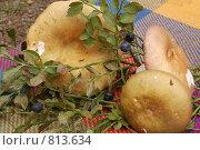 Купить «Грибы (осенние дары леса)», фото № 813634, снято 3 августа 2008 г. (c) Елена Азарнова / Фотобанк Лори
