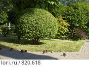 Дерево-сфера. Стоковое фото, фотограф Михаил Треусов / Фотобанк Лори