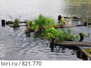 Старые заросшие мостки. Стоковое фото, фотограф Елена Реднева / Фотобанк Лори